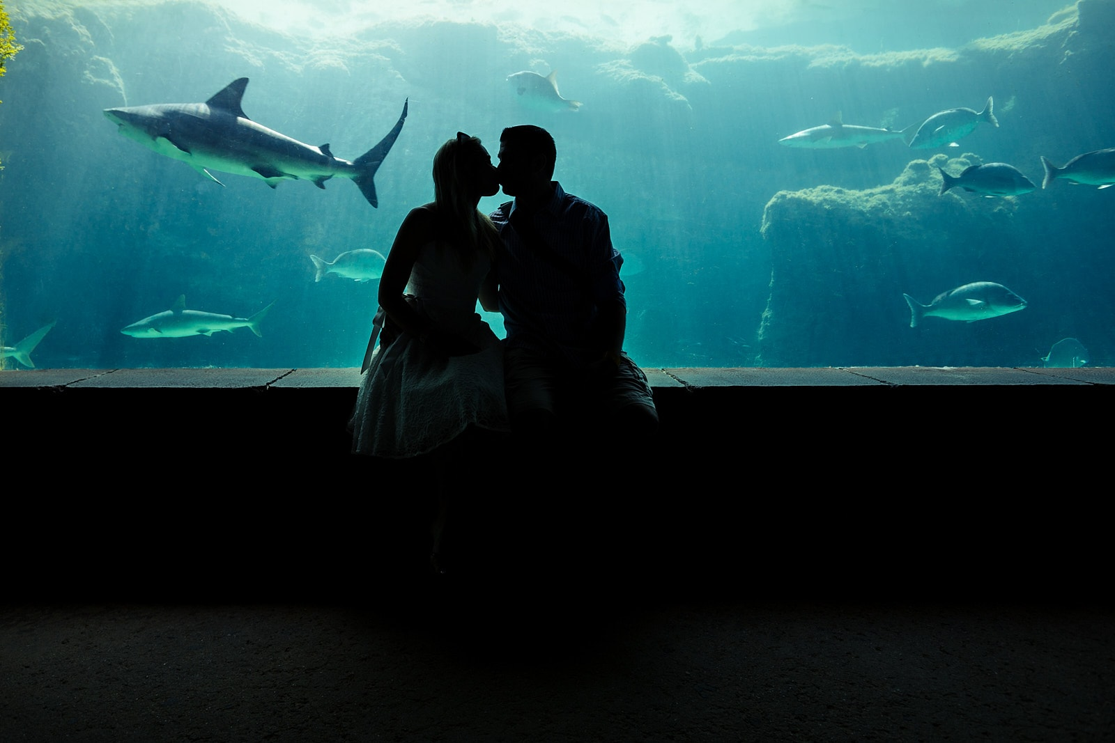 engaged couple kisses at Georgia Aquarium with sharks